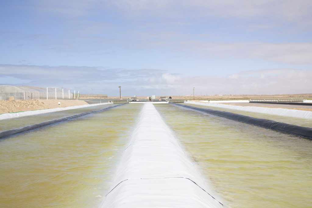 Article image for Sunlight, seawater and wind: A simple recipe for ambitious algae grower Susewi