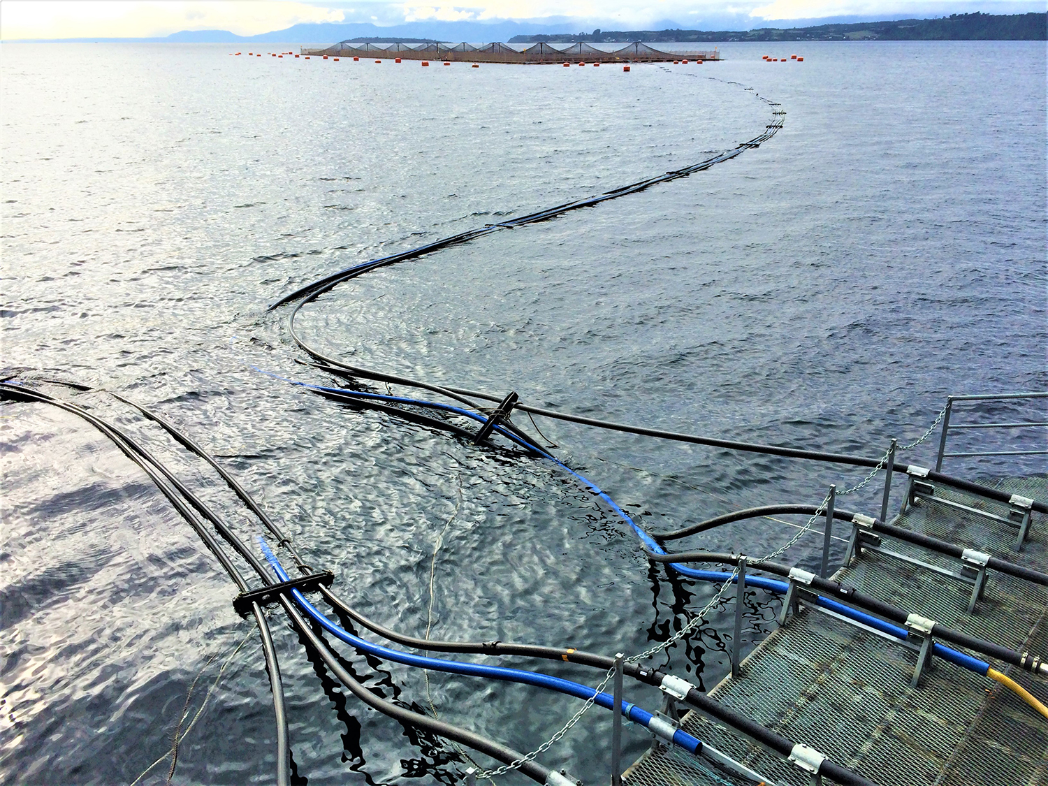 precision fish farming