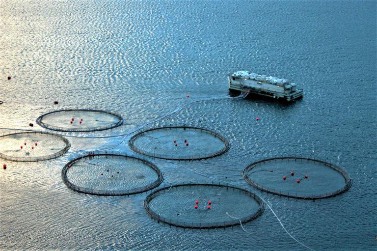 Article image for Precision fish farming: A new framework to improve aquaculture, Part 2