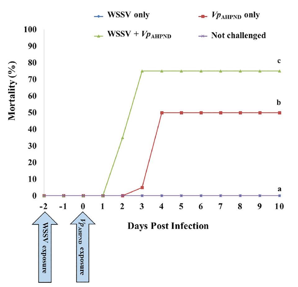 co-infección