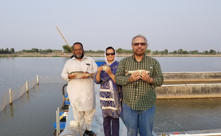 Article image for In-pond raceway systems introduced in Pakistan