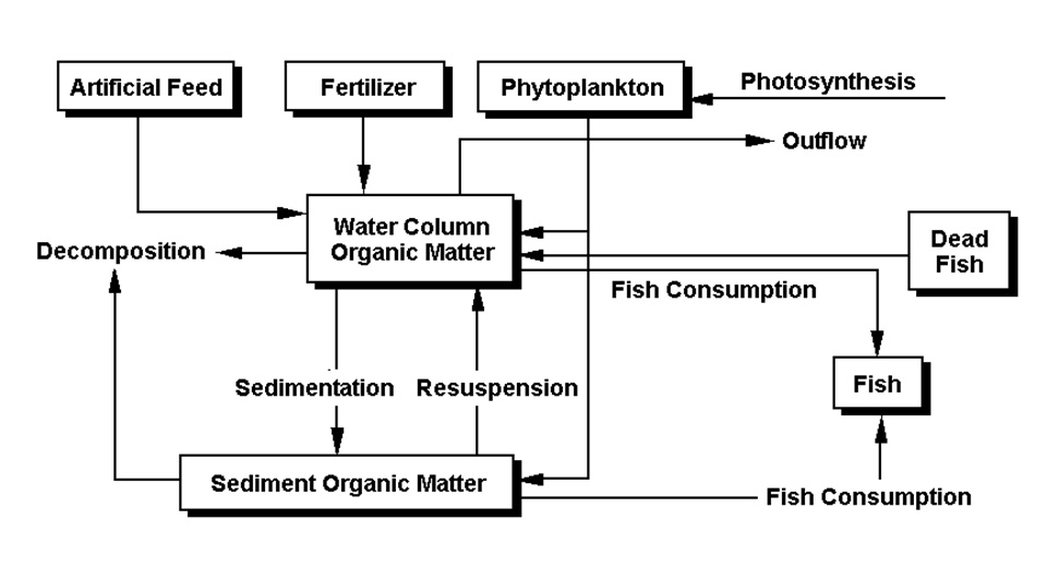 organic sediment