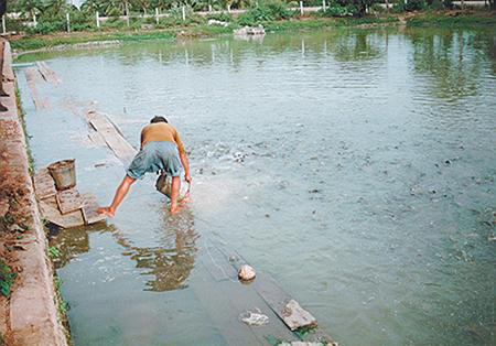Article image for No single solution for effluent management