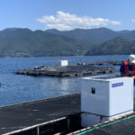 Can aquaculture go all-in on AI?