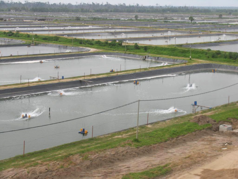 Article image for Energy use in aquaculture pond aeration, Part 1
