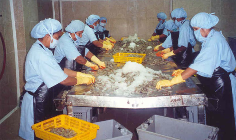 Article image for HACCP risk management tool controls viral pathogens at shrimp facilities