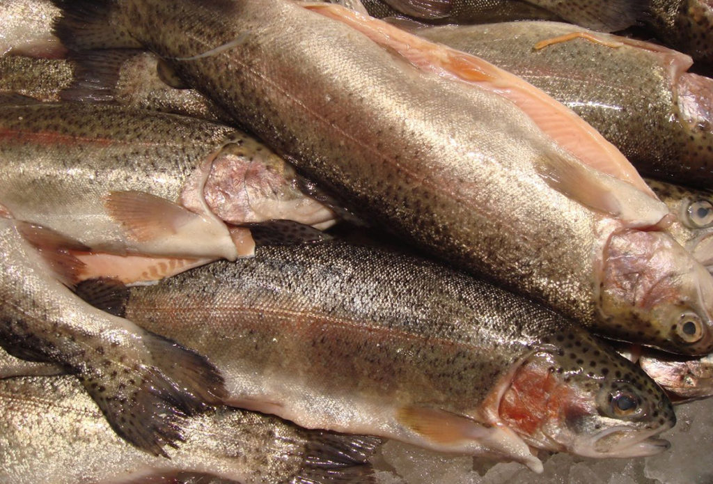 Article image for Quantifying temporal changes of selected fatty acids in fish