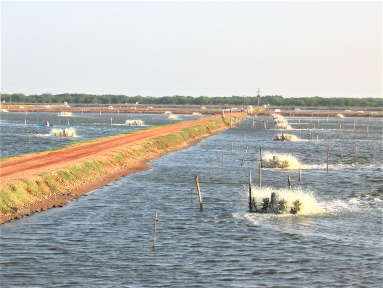 Article image for Energy use in aquaculture pond aeration, Part 2