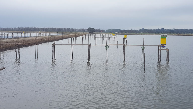 Article image for Considerations for automatic feeding in shrimp ponds