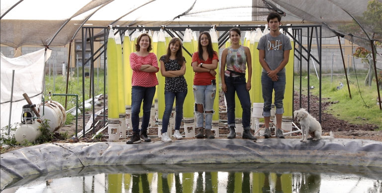 Article image for Mexican startup offers DIY aquafeed solution by upcycling wastewater
