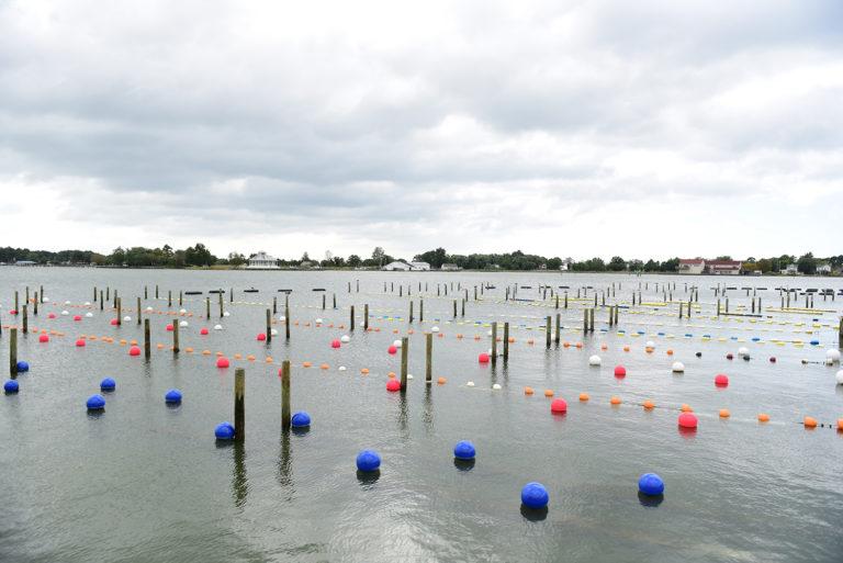 Article image for ¿Pueden los productores de mariscos aprovecharse del intercambio de nutrientes?