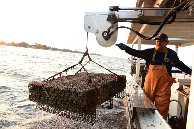 Article image for Can shellfish growers cash in with nutrient trading?
