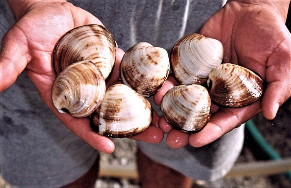 probiotics in shellfish