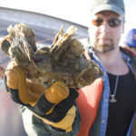 Oyster farm water quality and hydrodynamics in Chesapeake Bay