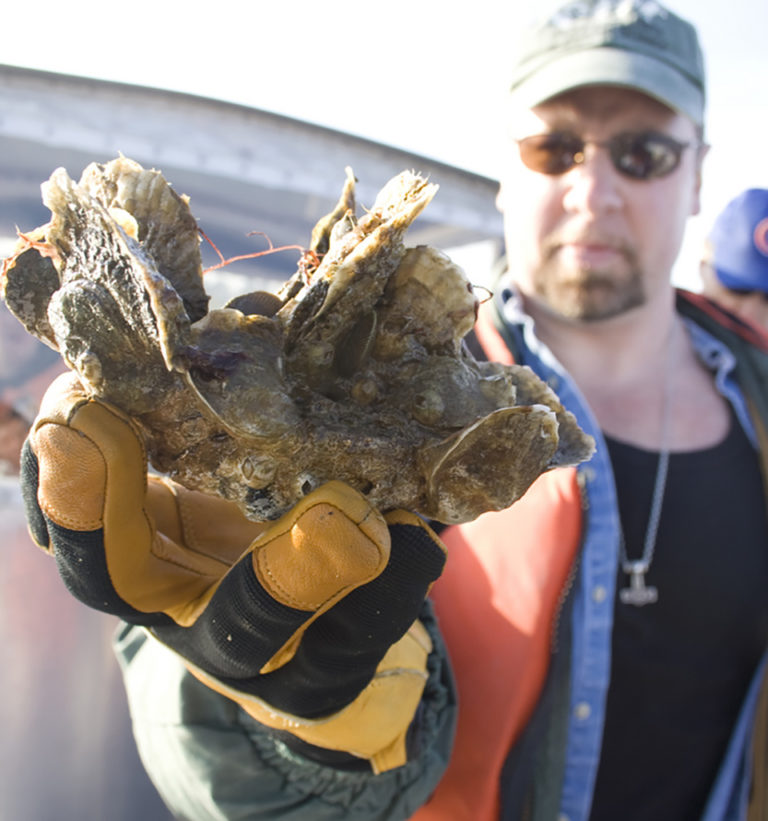 Article image for Oyster farm water quality and hydrodynamics in Chesapeake Bay