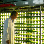 Making algae can get expensive. Innovations aim to bring costs down.