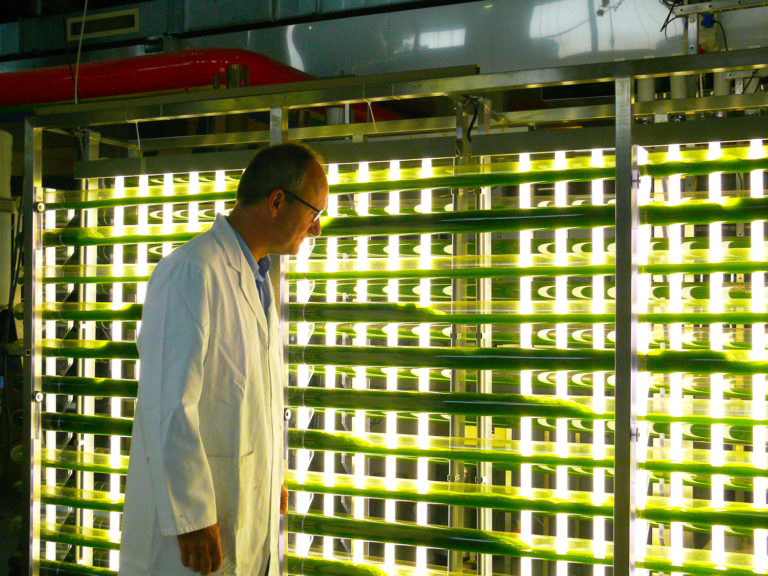 Article image for Making algae can get expensive. Innovations aim to bring costs down.