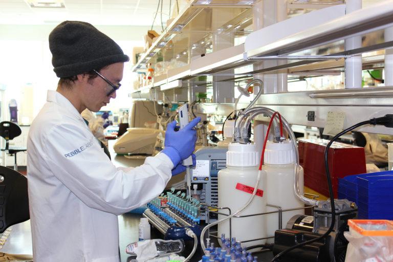 Article image for ¿Pueden las enfermedades del camarón ser vencidas por la interferencia bacteriana?