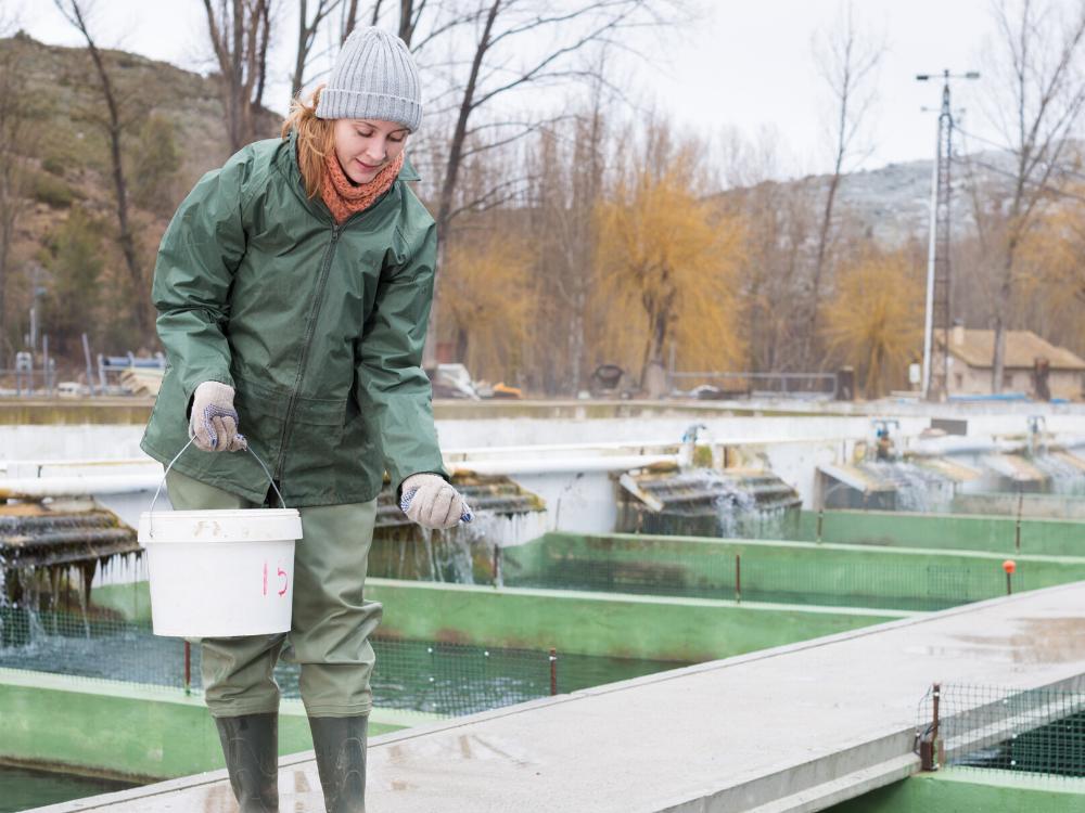 climate action fish farm