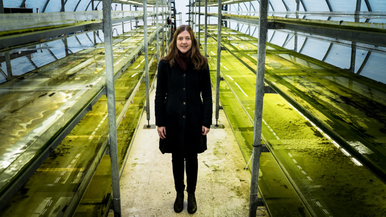Article image for Swedish innovators create multiple revenue streams from effluent