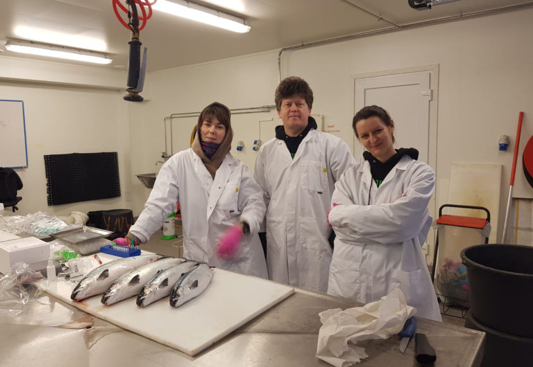 Article image for How can Norway defeat pancreatic disease in salmon? By detecting it faster.
