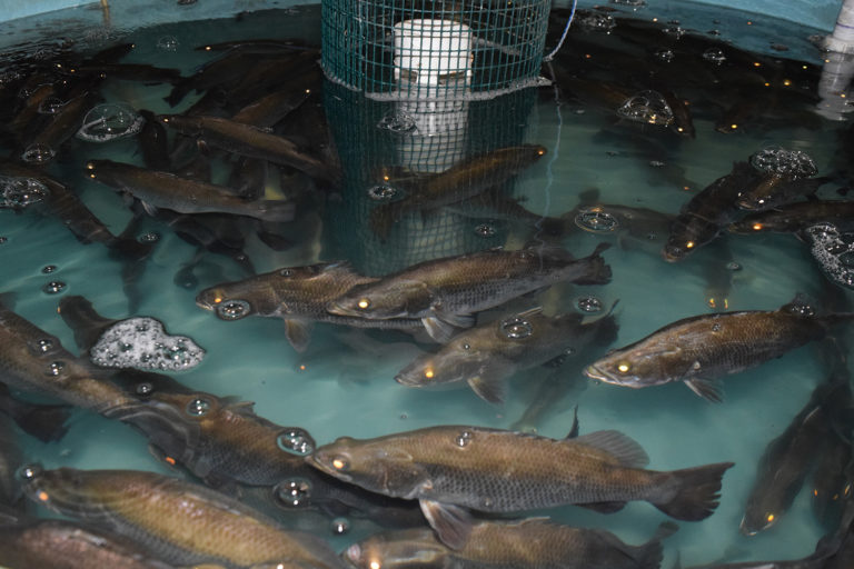 Article image for The coronavirus pandemic's influence on aquaculture priorities