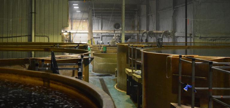 Article image for La influencia de la pandemia de coronavirus en las prioridades de la acuacultura