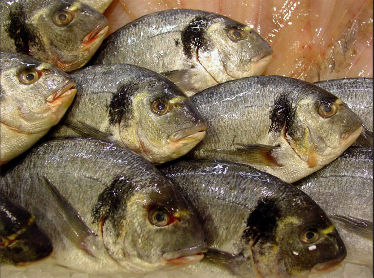 Article image for Combined effects of nutritional, biochemical, environmental stimuli on gilthead sea bream