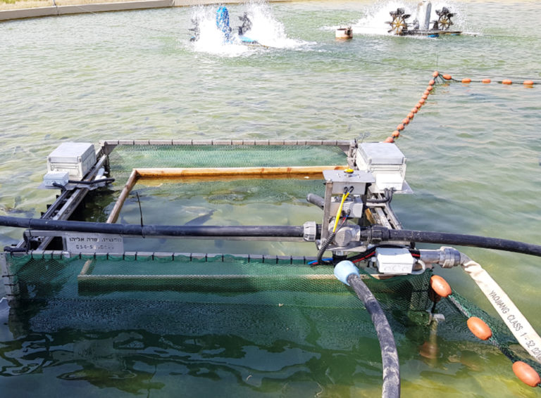 Article image for Fish sorting technology firm aims to modernize farms