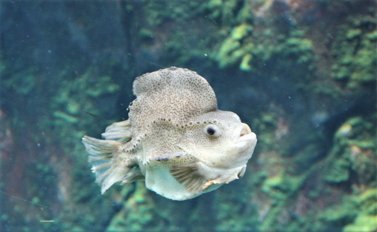 Article image for Lumpfish production in RAS with various water treatments