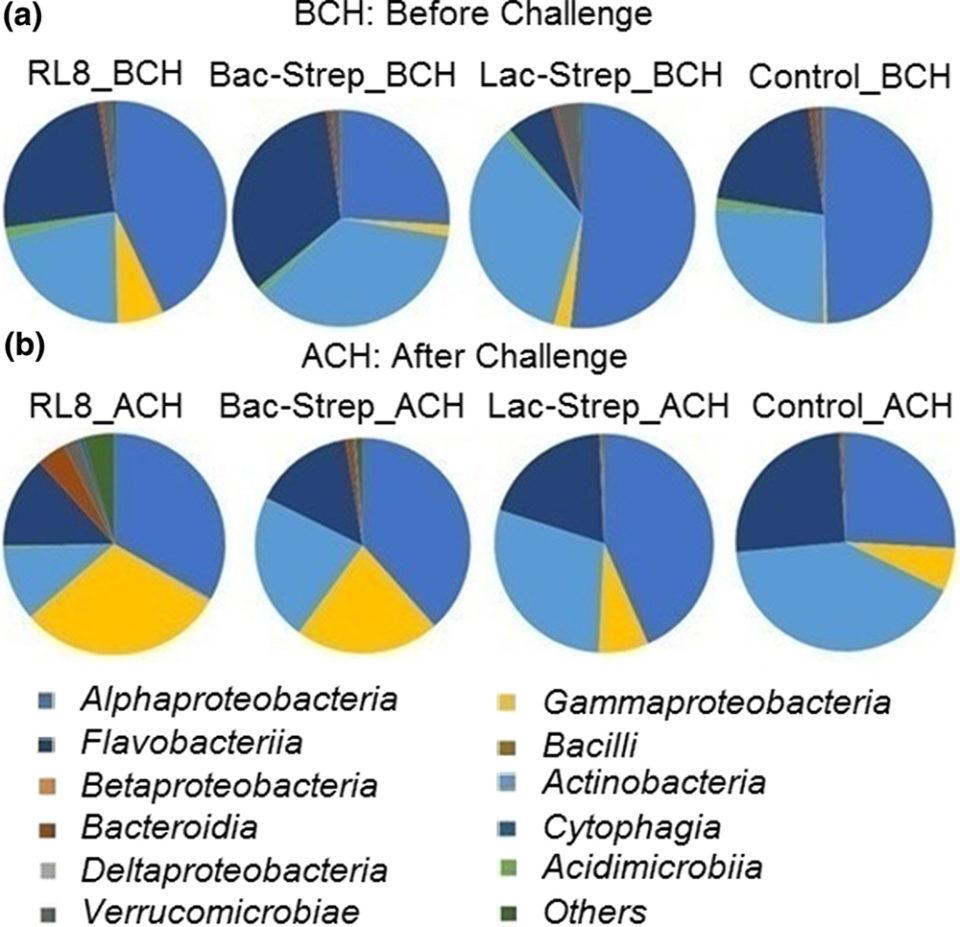 Streptomyces