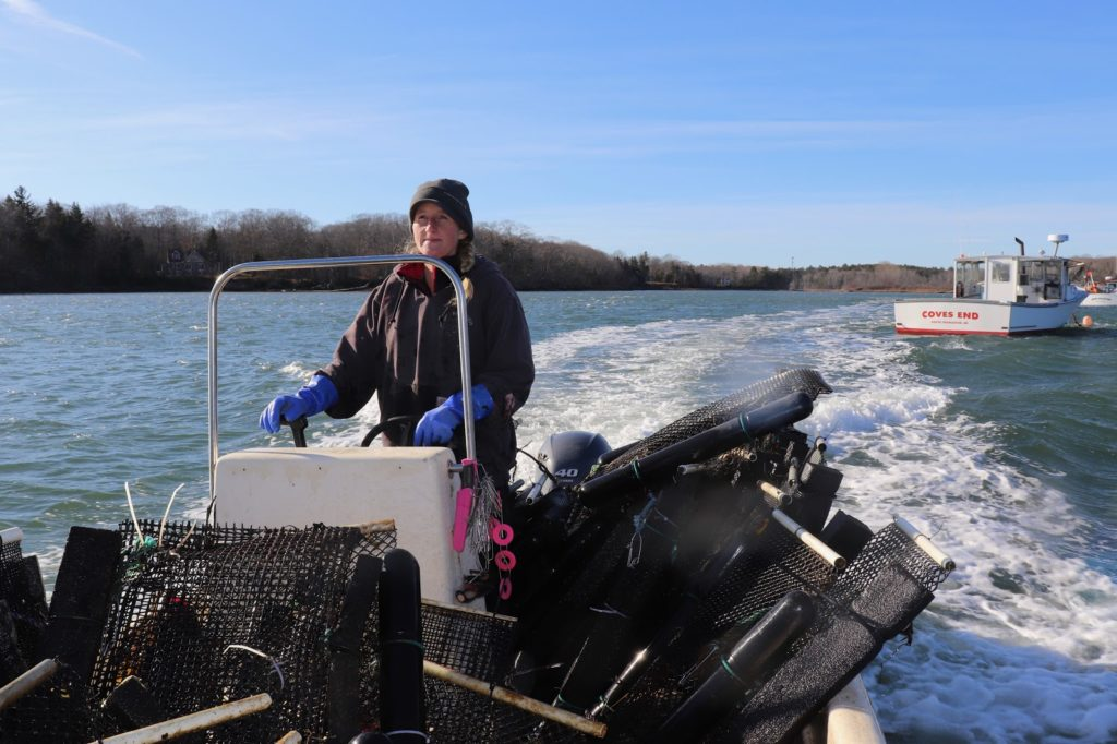 Article image for Maine Aquaculture Association Takes Helm of State's Burgeoning Industry