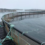 Net gains in aquaculture net technology