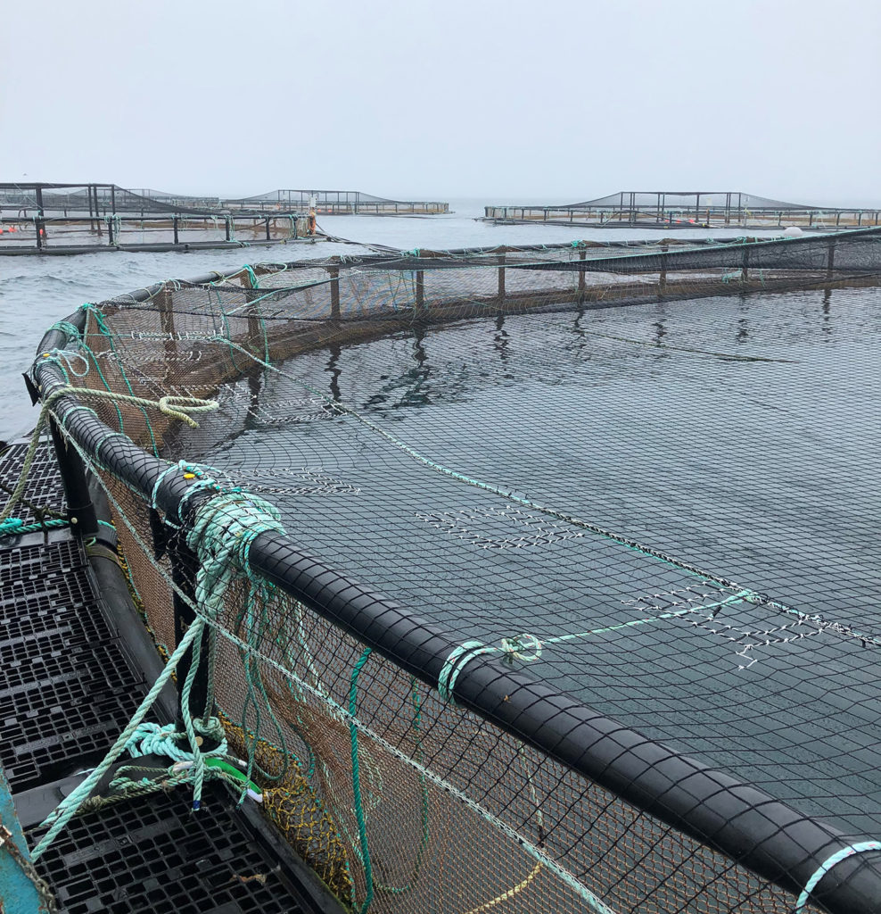 Article image for Net gains in aquaculture net technology