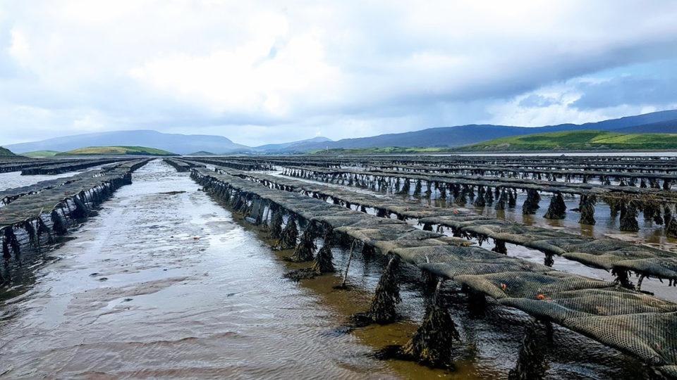 aquaculture area management
