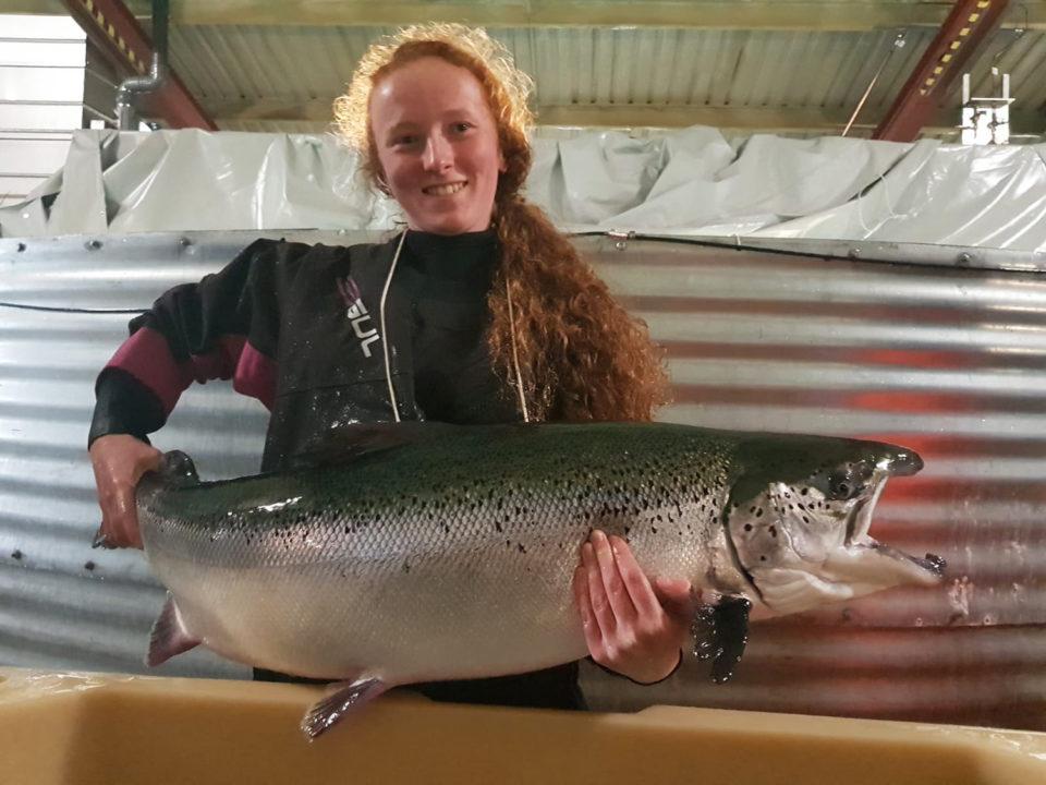 salmon ova