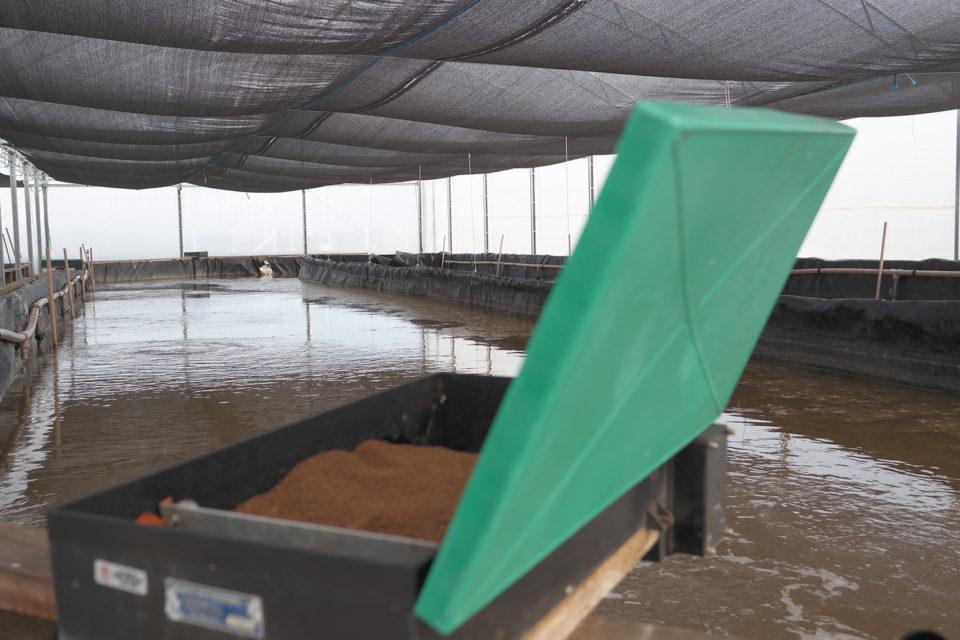 fishmeal analog