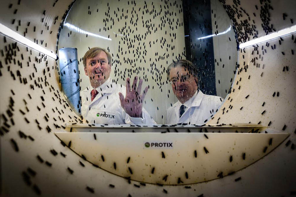 Article image for World's largest fly factory attracting investors eyeing aquafeed expansion