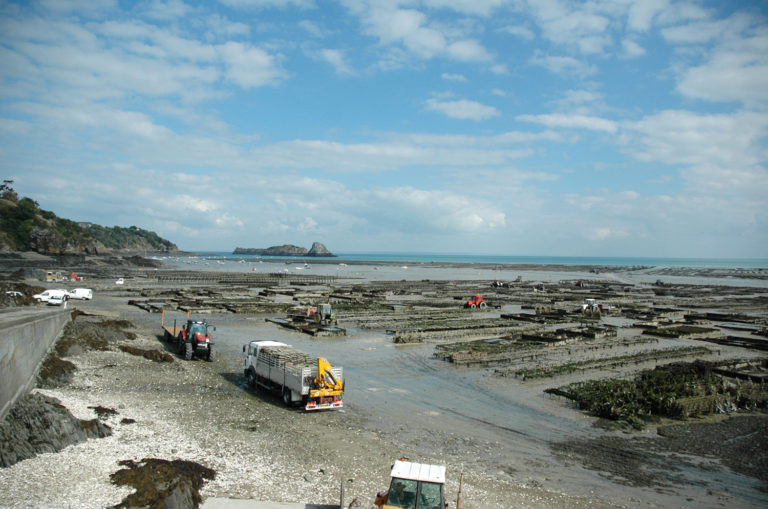 Article image for Identifying global opportunities for shellfish, seaweed aquaculture