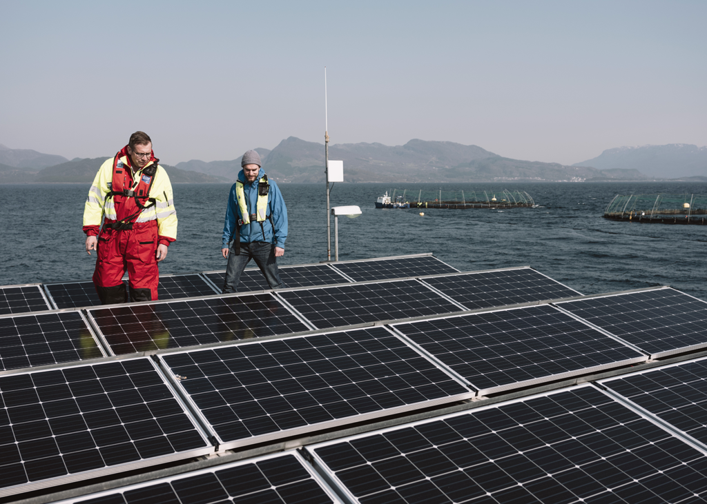Article image for Renewable energy could transform offshore aquaculture, but what about …