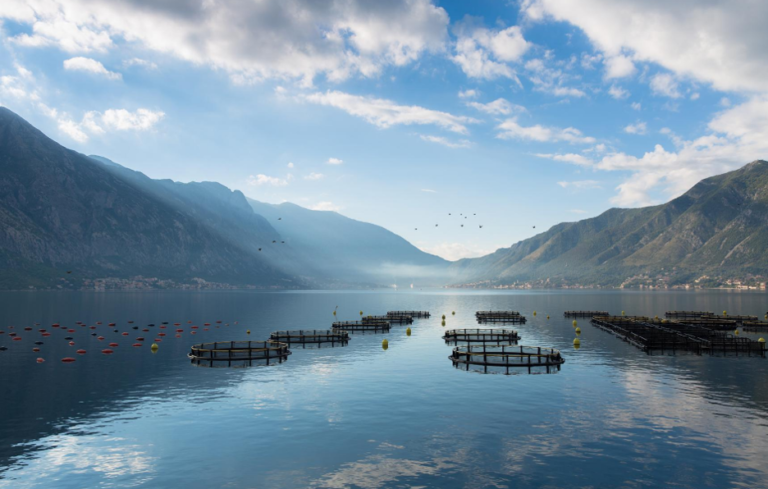 Featured image for Today's Farmed Fish: Aquaculture Re-examined for the Conscious Consumer
