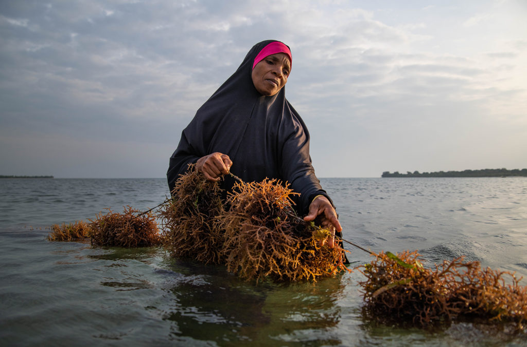 Article image for For seaweed farmers in Zanzibar, a chance for real growth