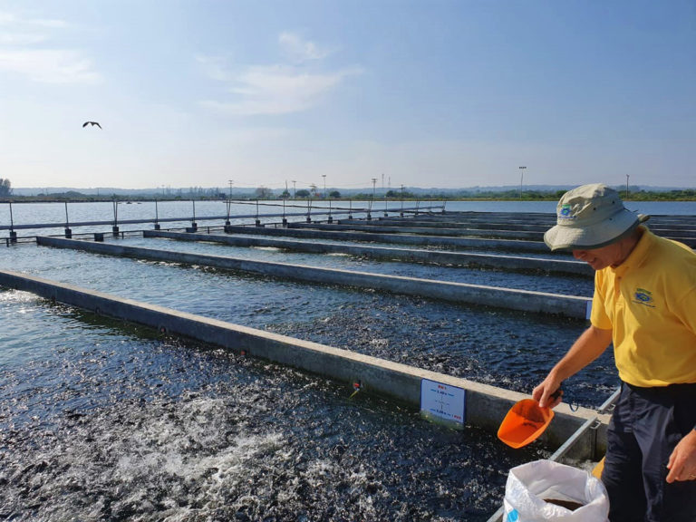 Article image for Evaluating commercial, intensive production of Nile tilapia in IPRS