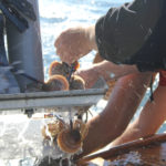 Maine shellfish farmers gaining confidence with scallops
