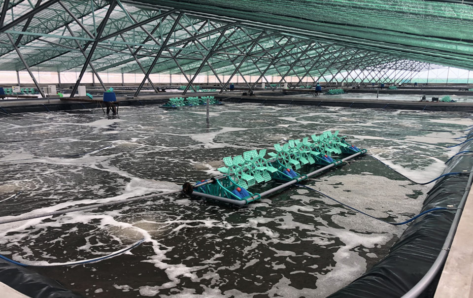 super-intensive indoor shrimp farming