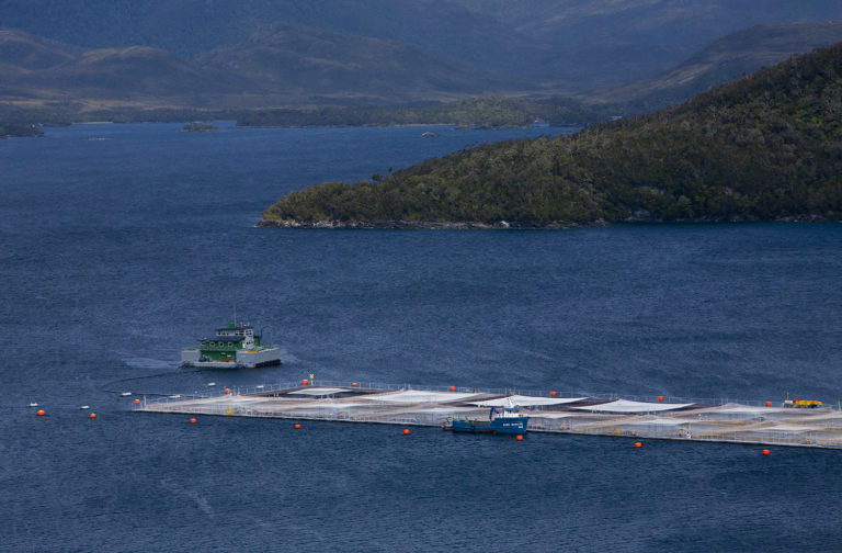 Article image for Gotta halve it: Inside the Chilean salmon industry's efforts to slash antibiotic usage