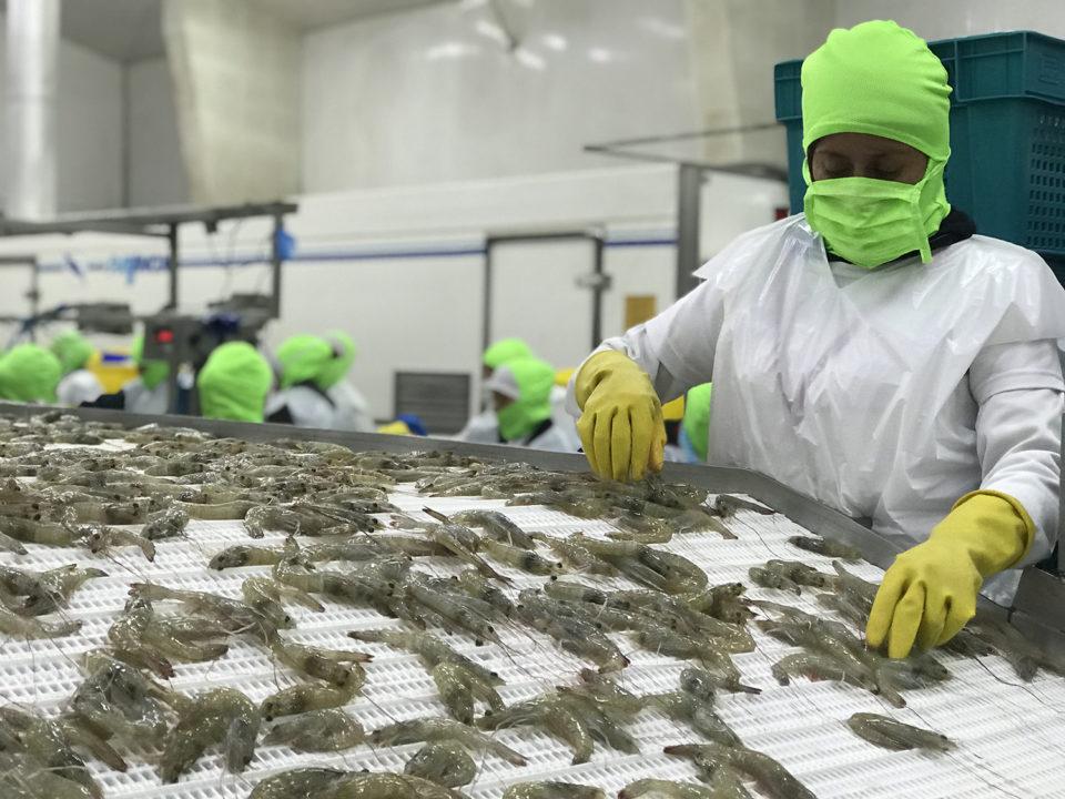 La industria camaronera de Ecuador