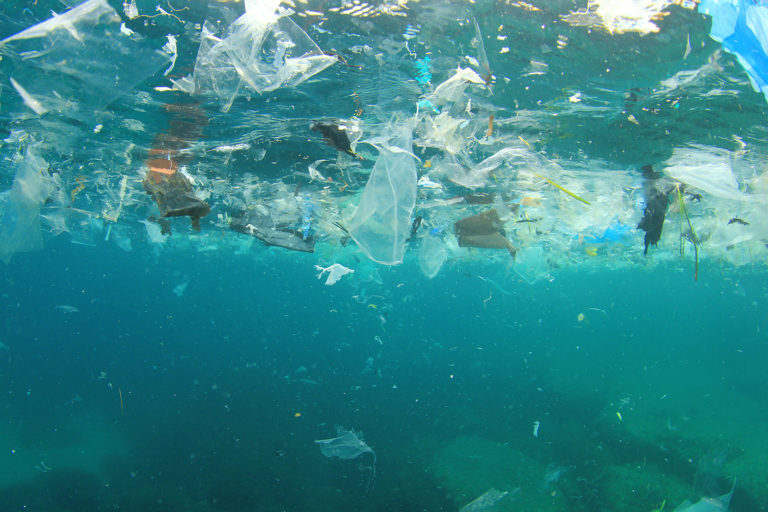 Article image for What threat do microplastics, a.k.a. 'ocean hitchhikers', pose to aquaculture?