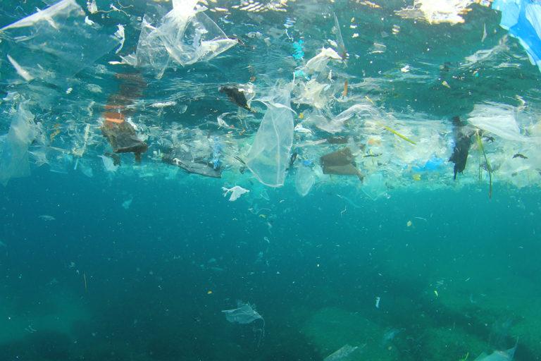 """Article image for ¿Qué amenaza representan los microplásticos, también conocidos como """"mochileros oceánicos,"""" para la acuacultura?"""