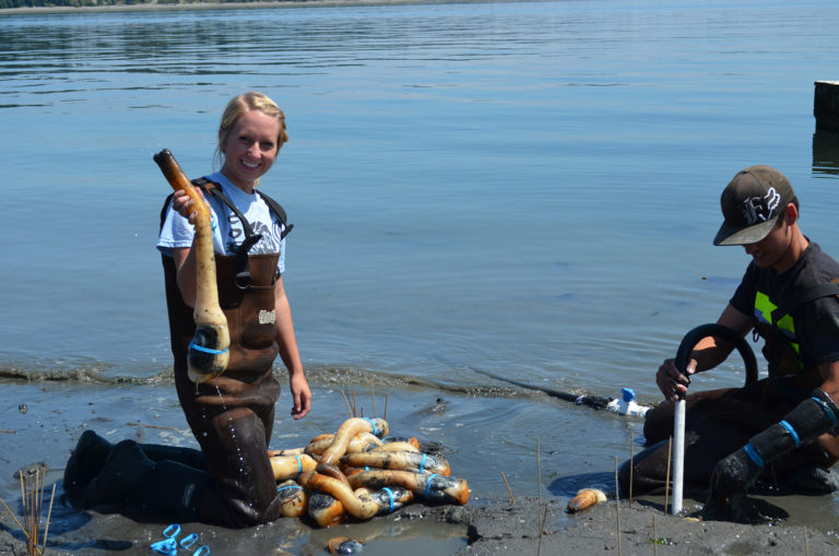 Article image for Pandemic persists and Pacific NW shellfish sector digs in